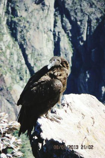 Ojo del cóndor peruano