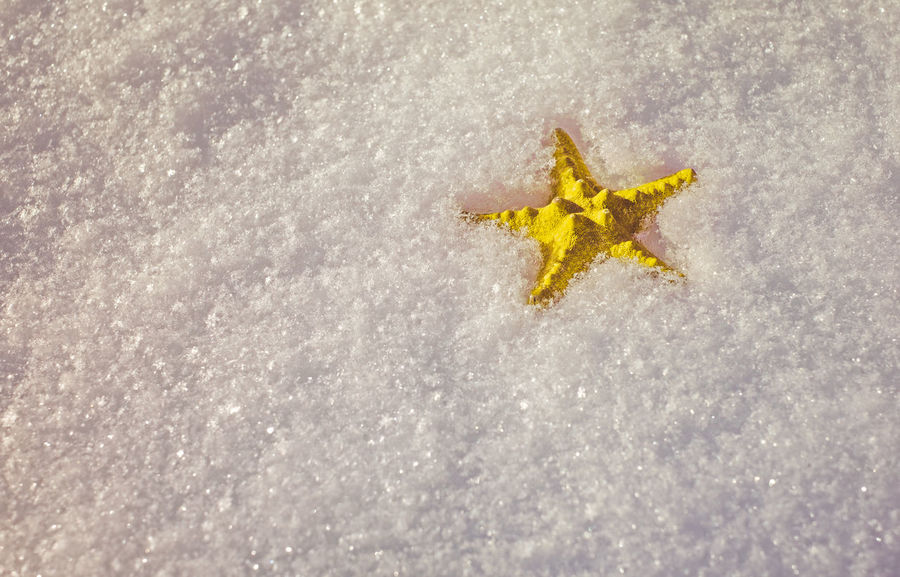 Crafted yellow starfish in fresh snow Snow ❄ Winter Animal Themes Animals In The Wild Close-up Cold Temperature Cold Winter ❄⛄ Crafted Day Full Length High Angle View Nature No People One Animal Outdoors Sea Life Snow Snow Covered Snowflake Starfish  Starfish  Winter Winter Wonderland Yellow Star