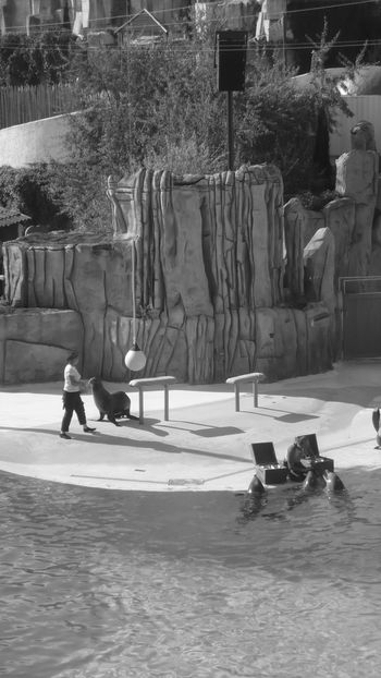 Amusement Parks Black And White Dauphin Parc Asterix Real People Water Women