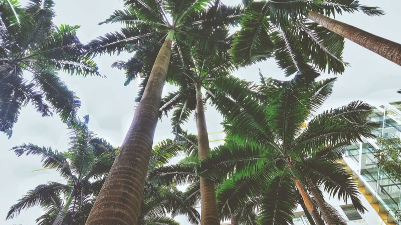 palm trees garden city Tree Tree Area Branch Forest Tree Trunk Leaf Social Issues WoodLand Tropical Rainforest Rainforest Tropical Tree Treetop Tree Canopy  Palm Leaf Tropical Climate