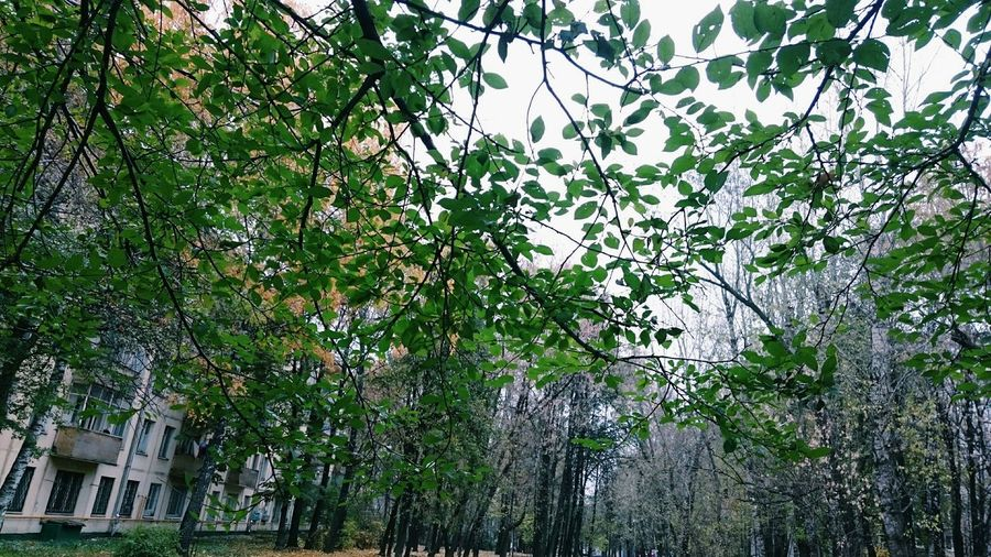 Taking Photos Day Boring Hello World Russia My Little Collection Photo ... Relaxing Tree_collection  MyLove❤ Autumn Hi! Green Green Green!