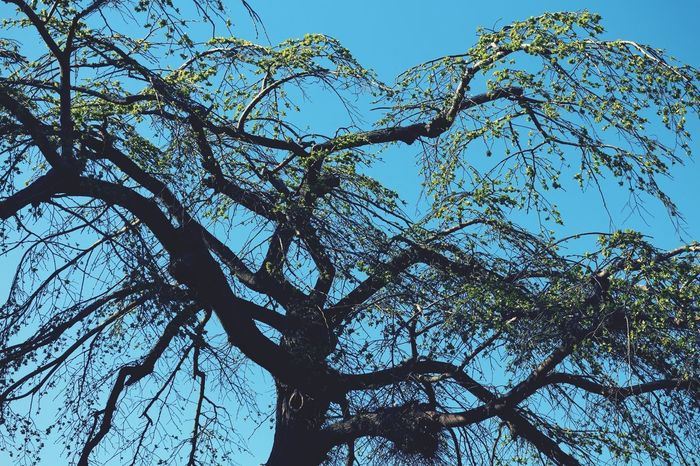 Low Angle View Tree Plant Sky Branch Beauty In Nature No People