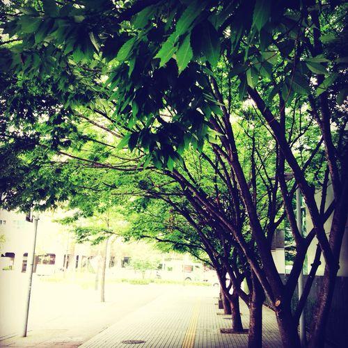 봄의 어느날