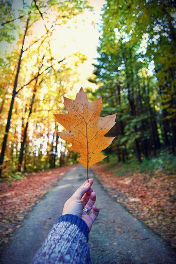 Autumn leaves on road
