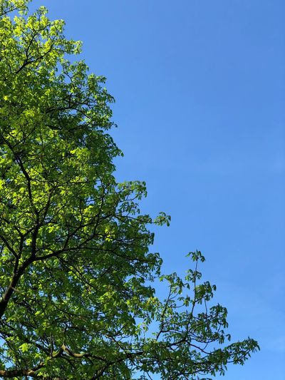 Plant Sky Tree Low Angle View Growth Blue No People Nature Beauty In Nature Green Color Day Clear Sky Tranquility Outdoors Plant Part Branch Leaf Sunlight Copy Space Green