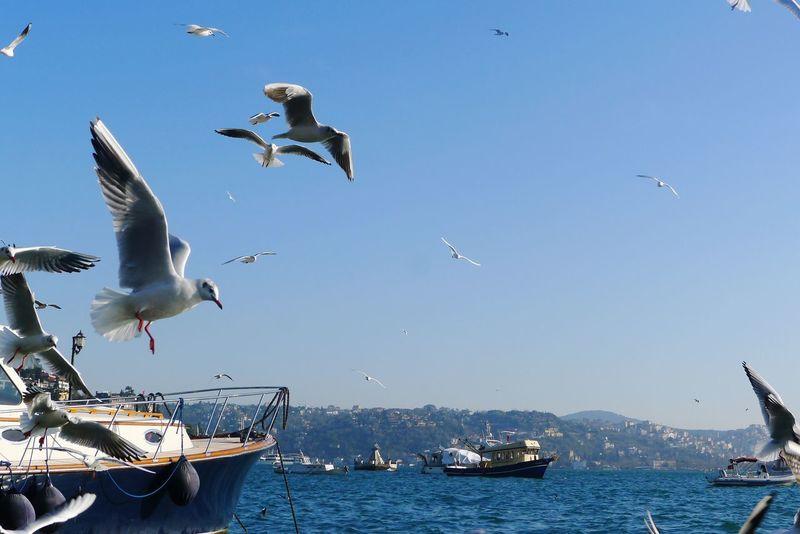 Istanbuldayasam Sea And Sky Eyeemphotography Streamzoofamily Vscocam Good Night Eye4photography  Bird Photography Birds Amimals