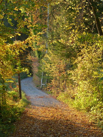 Autumn Walk Autumn Beauty In Nature Leaf Nature No People Outdoors Tranquil Scene Tranquility Walkway