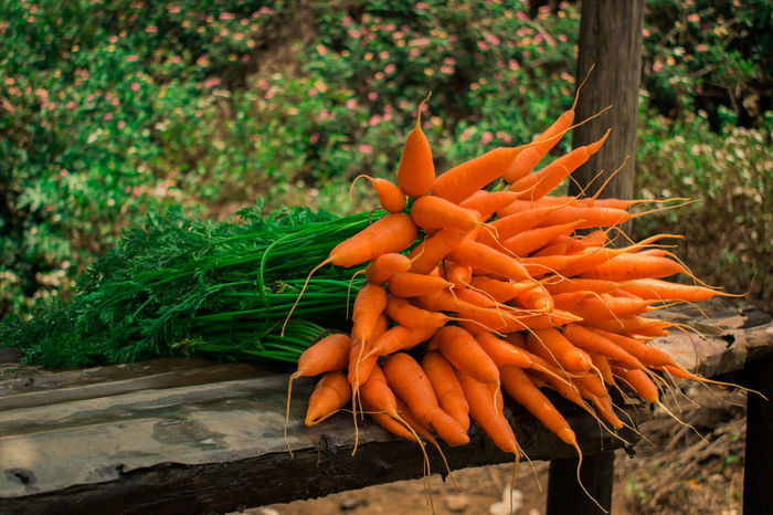 Right from the hands of nature Vegetable Carrot Orange Color Organic Agriculture Healthy Eating Root Vegetable Growth Food Nature Food And Drink Day Outdoors Freshness Bunch Plant Healthy Lifestyle Close-up Munnar Kerala Teagardens India Idukki Landscapes Munnar India Munnar Kerala