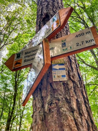 Low angle view of information sign on tree trunk