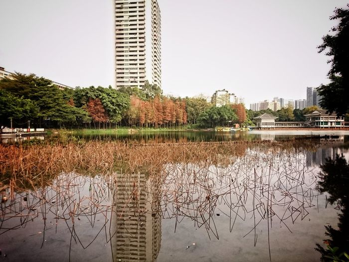 Guangzhou Canton Reflection Lake View Urban Exploration Lensculturestreets Street Photography EyeEmBestPics Urbanphotography Snapshots Of Life City Life Lensculture Cityscape Streetphotography Eyeemphoto Mobilephotography Urban Lifestyle Xperia Z5 AMPt Landscape Trees Trees And Water Water EyeEm Gallery Dailylife