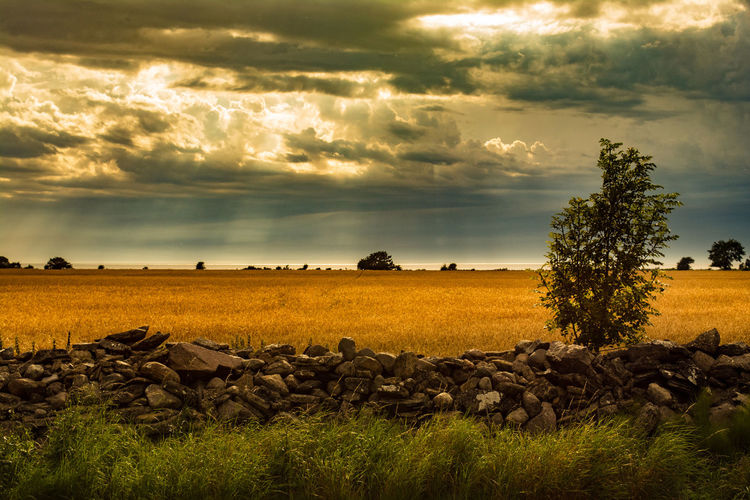 Rubble Wall Wall Wheat Beauty In Nature Cloud - Sky Day Field Grass Landscape Nature No People Outdoors Rocks Scenics Sea Sky Storm Cloud Tranquility Tree
