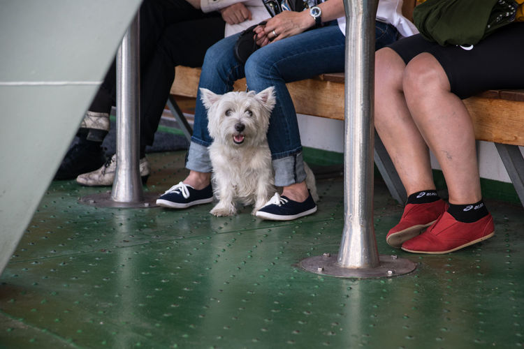 Canine Dog Domestic Animals Funny White Terrier Legs Leisure Activity Lifestyles Mammal Pet And Owner Pets Portrait Terrace White Terrier