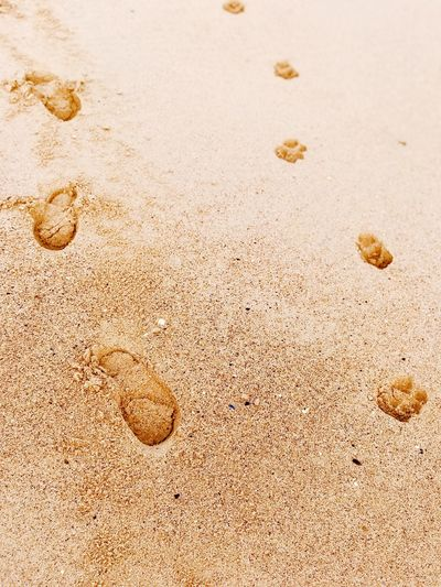 Prints in sand Dogpawsand EyeEm Selects Sand Beach Land Nature Full Frame FootPrint No People Close-up Day Sunlight