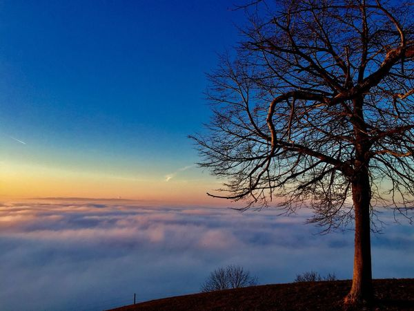 Seaoffog Fog Foggy Swiss Hiking Landscape Nature Winter Sea Tree Sky Cloud - Sky