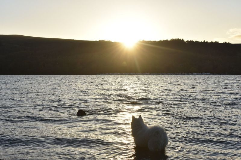 Sunset Sunlight Animal Sun No People Dog Outdoors Nature Lake Water Animal Themes Beauty In Nature Cold Temperature Swimming Day Silhouette EyeEm Masterclass Beauty In Nature Lost In The Landscape EyeEmBestPics EyeEm The Week On EyeEm EyeEm Best Shots EyeEm Gallery Sky