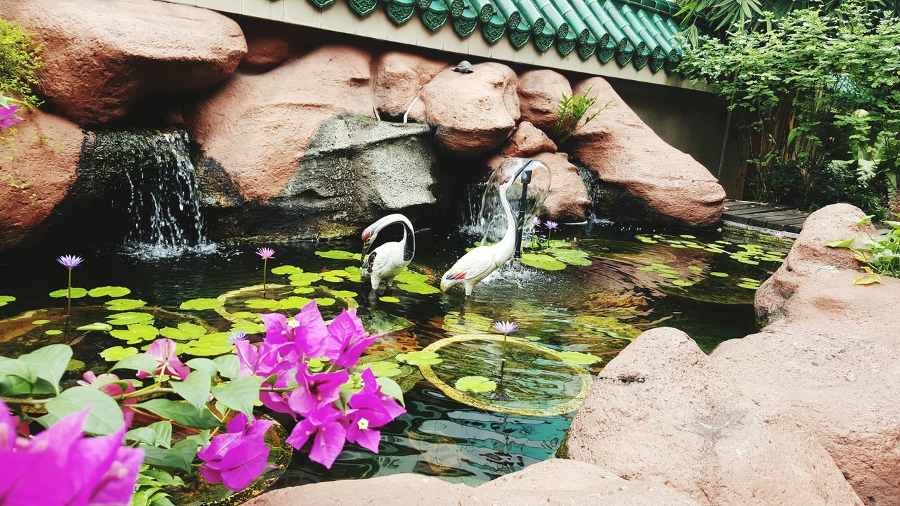 water, pond, animal themes, nature, outdoors, day, animals in the wild, no people, growth, plant, waterfront, mammal, beauty in nature, flower, freshness