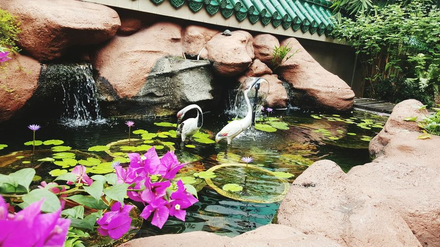 EyeEm Selects Water Nature Plant Flower Beauty In Nature Bird Klcc Temple