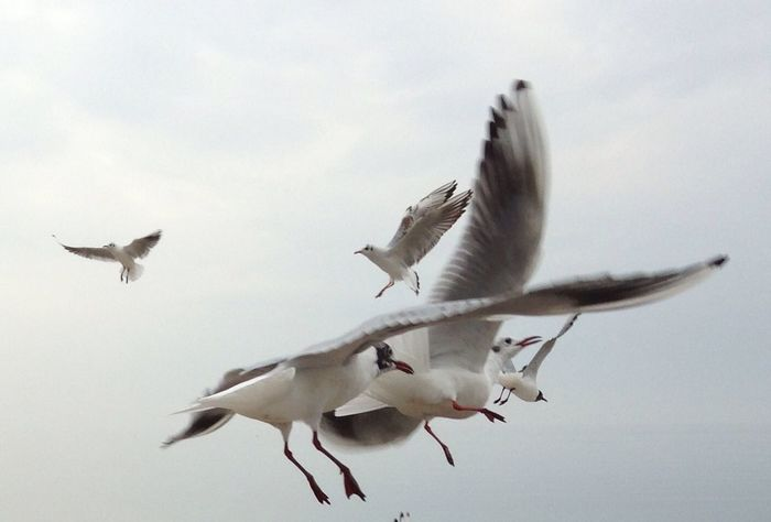 In volo........ Nature_collection EyeEm Nature Lover The Purist (no Edit, No Filter) Nature