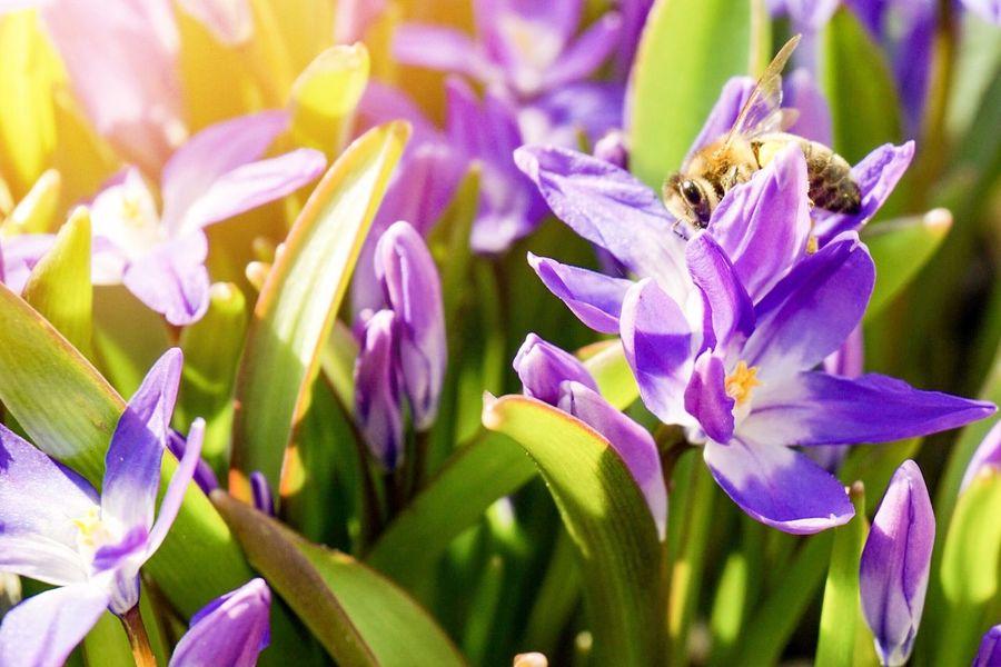 Biene Bienen Bei Der Arbeit Bee Honey Honey Bee Honig Honigbiene Flower Blume Blumen Flowers Sun Sonne EyeEmNewHere
