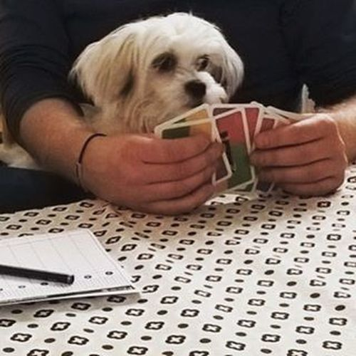 Playing cards Maltese Malteser White Dog Dogs Dogsofig Dogsofinstagram Dogmodel Trendsetter Instafamous Doglovers Dogmodels Dogstagram Puppy Pup Cute Eyes Instagood Dogs_of_instagram Pet Pets Animal Animals Petstagram Dogsitting photooftheday ilovemydog instapuppy instadog