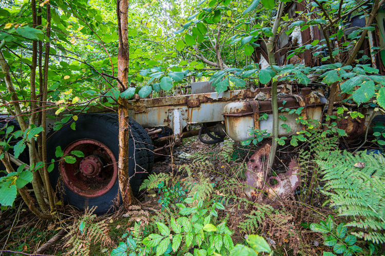 Plants growing on abandoned land in forest