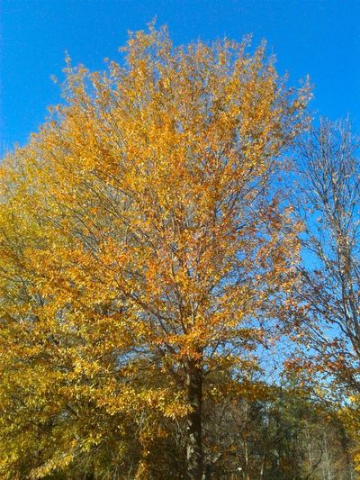Low Angle View Tree Nature Day Beauty In Nature No People Growth Outdoors Sky Autumn Scenics Clear Sky Branch Close-up Freshness