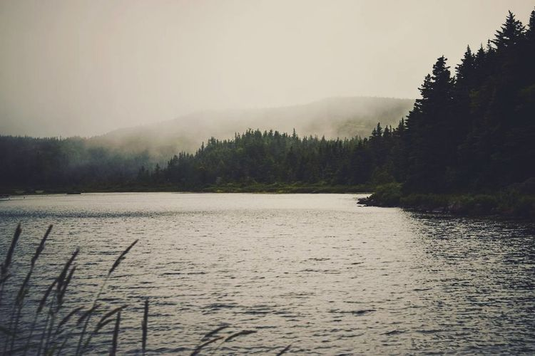 Fog Lake Tree Nature No People Landscape Outdoors Fog Tranquility Cloud - Sky Water Forest Scenics Mountain Day Rural Scene Beauty In Nature Sky