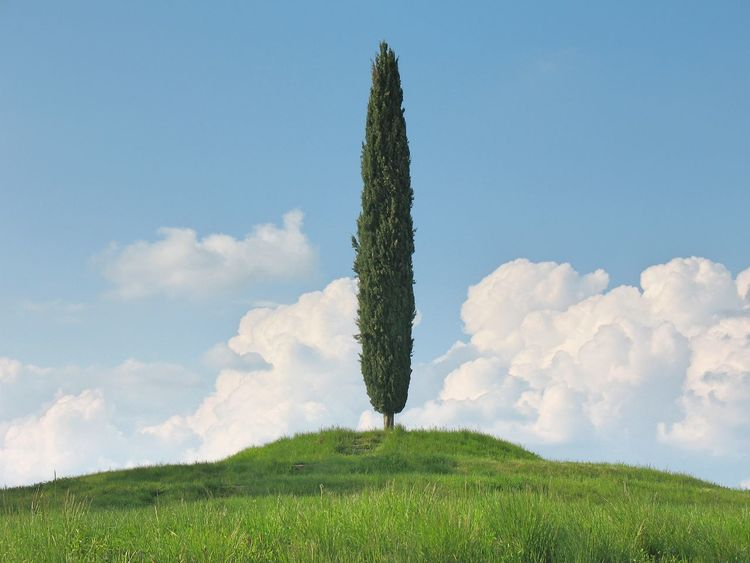 Alone Tree Blue Cloud Cloud - Sky Clouds And Sky Clouds And Trees Collio Cypress Cypress Hill Grass Grassy Green Green Color Idyllic Landscape Non Urban Scene Outdoors Fine Art Photography Scenics Sky Standing Alone Colour Of Life Minimalism Tree And Sky Tree And Sky
