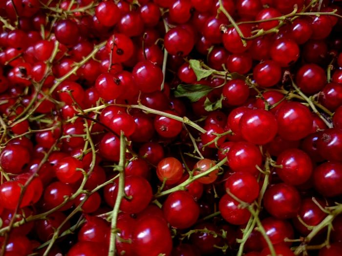 Red Currant Redcurrant Berry