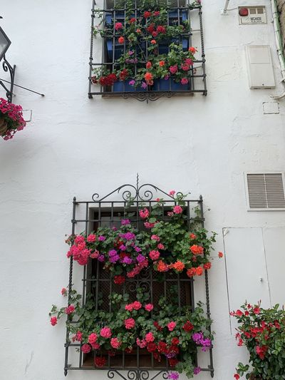 Potted plants against building