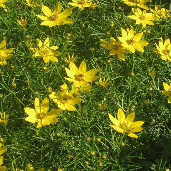 Flower_perfection Flowerlovers Floweroftheday Flowerstagram flowers flower flowerstalking flowersstagram flowersofinstagram цветы цветок amazing