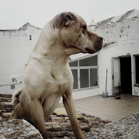 Ralph my dog. Dog Cheese! Animals Mybeautifuldog