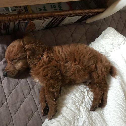 Love 사랑 One Animal Animal Themes Domestic Mammal Domestic Animals Animal Pets Sleeping Bed Vertebrate Brown