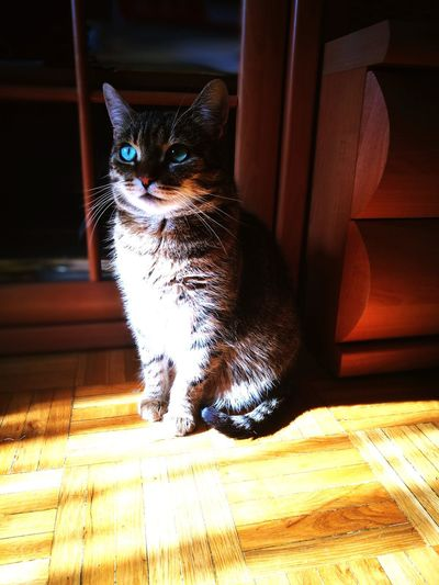 One Animal Pets Domestic Animals Animal Themes Mammal Domestic Cat Indoors  No People Feline Day Close-up Debrecen Diva♥ Natural Light