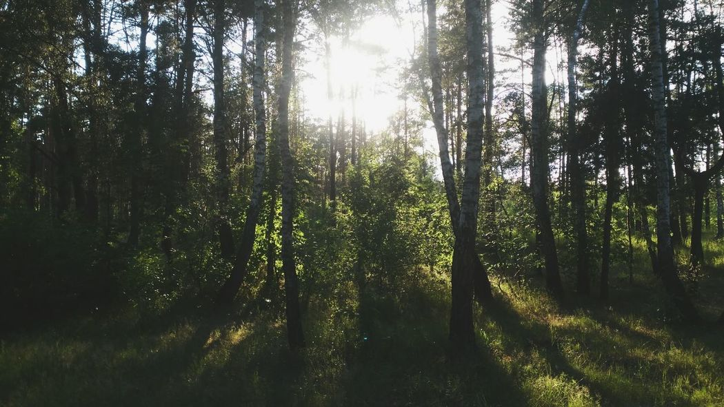 Walking Around Forest Nature Nature_collection EyeEm Nature Lover Evening Relaxing