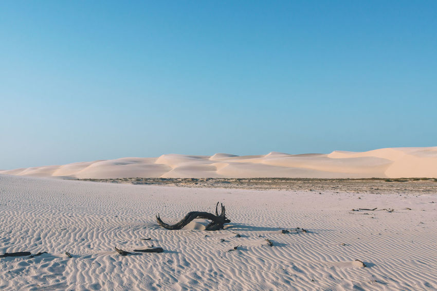 Exploring the beautiful dunes of Lencois Maranhenses. Arid Climate Beauty In Nature Blue Branch Clear Sky Day Desert Desert Dry Horizon Over Land Landscape Nature No People Outdoors Pattern Sand Sand Dune Scenics Sky Sun Sunlight Tranquil Scene Travel Travel Destinations Traveling The Great Outdoors - 2017 EyeEm Awards EyeEmNewHere Sommergefühle EyeEm Selects Lost In The Landscape Going Remote The Great Outdoors - 2018 EyeEm Awards