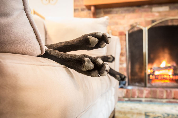 Cropped image of dog relaxing on couch against fireplace