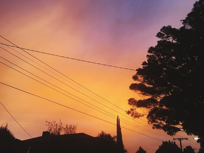 Sunset Sky Silhouette Plant Low Angle View Tree Nature Orange Color Power Line  Beauty In Nature Cloud - Sky