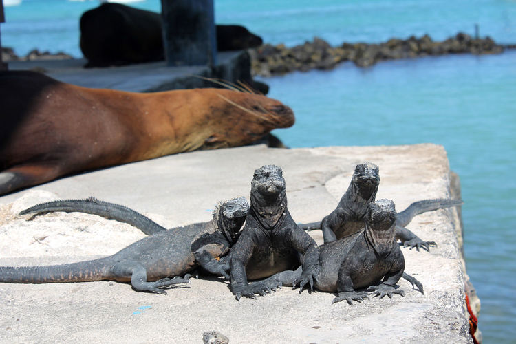 High angle view of iguanas at beach