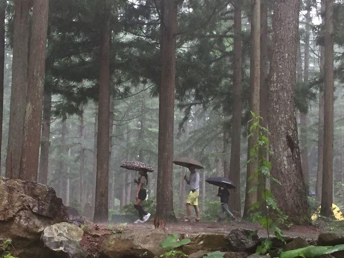 2016.7.3.sun. 雨のひるがの高原。 Rain 雨 ひるがの高原キャンプ場 キャンプ Camp