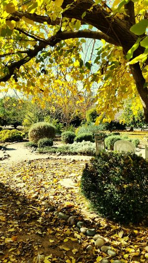Breathe deeply, Autumn Leaves Peace And Tranquility Early Morning In The Gardens