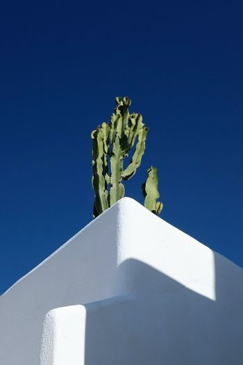 Cactus Plant Shape Shapes Architecture Blue Blue Sky Clear Sky Cyclades Day Greece Low Angle View No People Outdoors Santorini Sky
