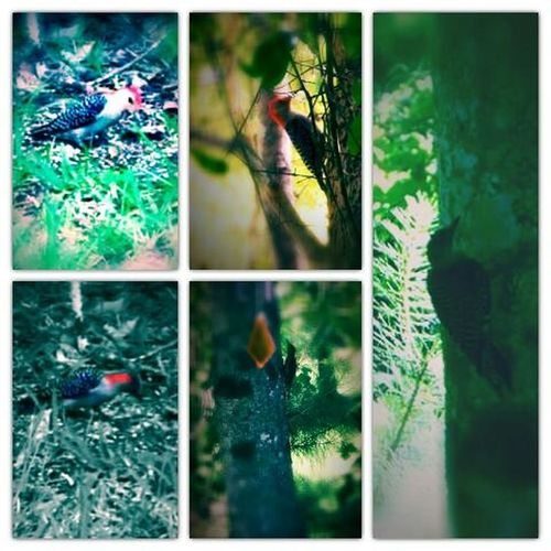 Florida Woodpecker Ground Level View Nature Nature's Diversities - 2016 EyeEm Awards The Great Outdoors - 2016 EyeEm Awards First Eyeem Photo Birds Outdoor Photography Backyard Photography Birdfeeders Cut And Paste