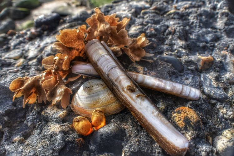 sea shells Malephotographerofthemonth Nature Photography Nature Wildlife & Nature Norfolk Seascape Titchwell Seascape Sea Life Beach Photography Beach Life Close-up Shore Beach