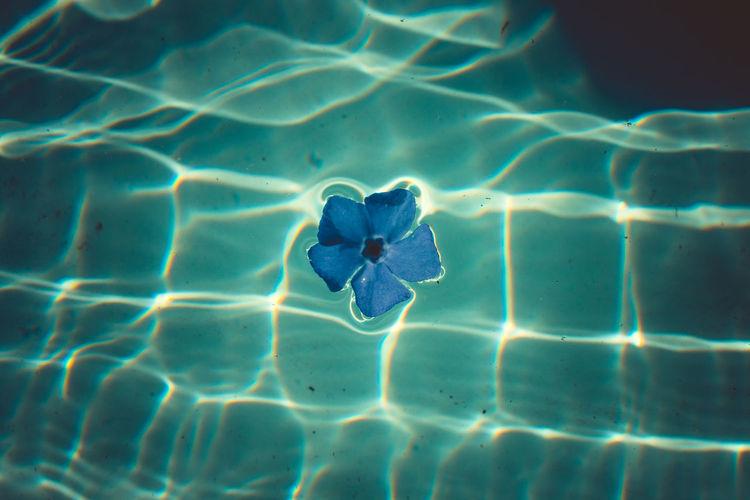 Blue Water