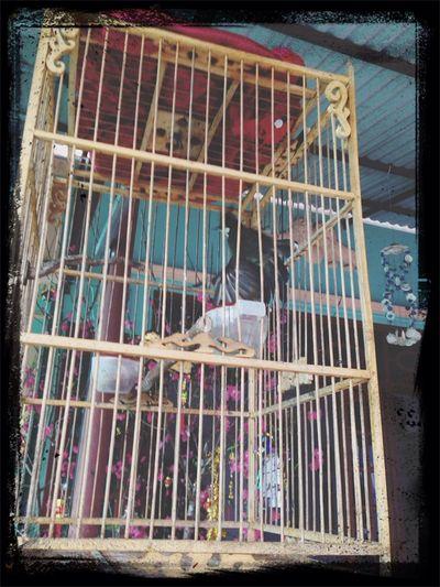 My birds ????? Mybird Beauty Relaxing Bubaby