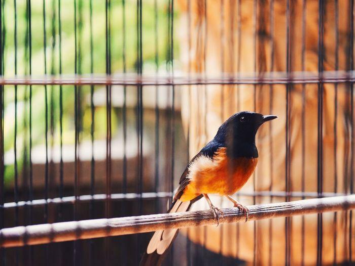 EyeEm Best Shots Exploring Taking Photos Birds Lonely