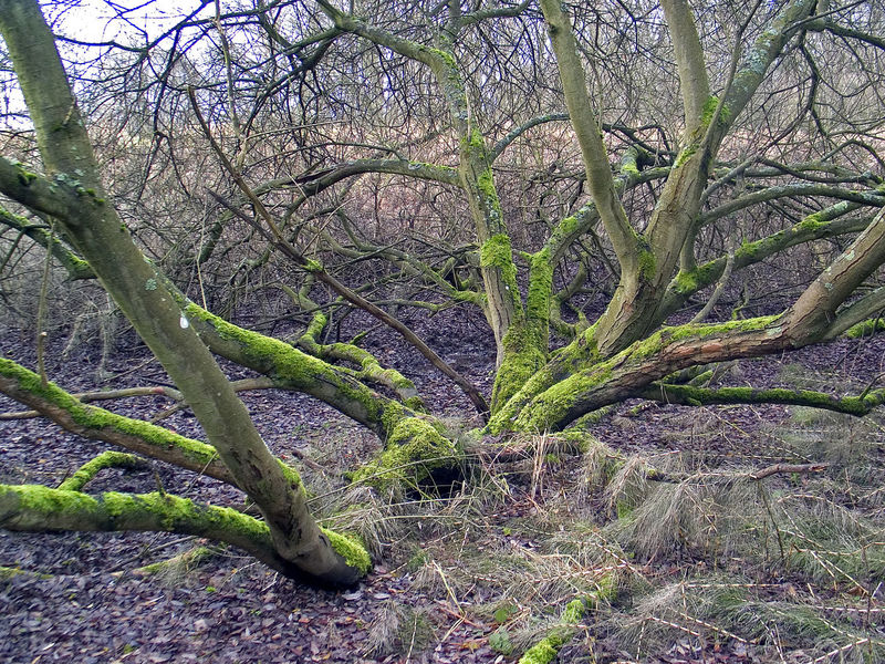 Beauty In Nature Branch Forest Nature Outdoors Plant Tree Tree Trunk