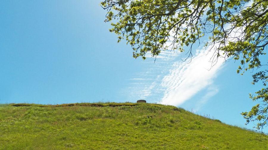 Mound Hillock Part Saint Michel Tumulus Well  Low Angle View Tree Tea Crop Rural Scene Field Sky Grass