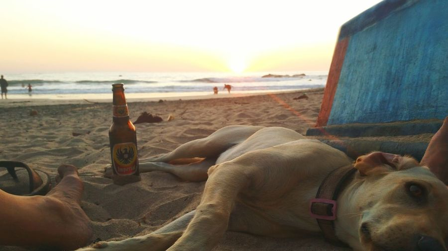 Every day my flight gets closer and closer yet every day it seems easier and easier to miss... Beach Sunset Sea Sand Dog Perros❤ Beer Cerveza Imperial Sandals Horizon Over Water Pure Vida Nature Sky Costa Rica Playa EyeEmNewHere